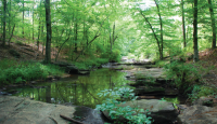 Hardwood forests and granite-strewn streams are key to keeping our drinking water clean and safe