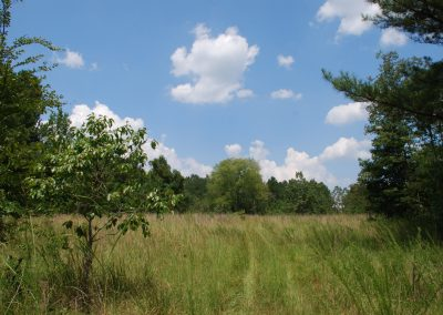 Forest and fields in McDuffie County