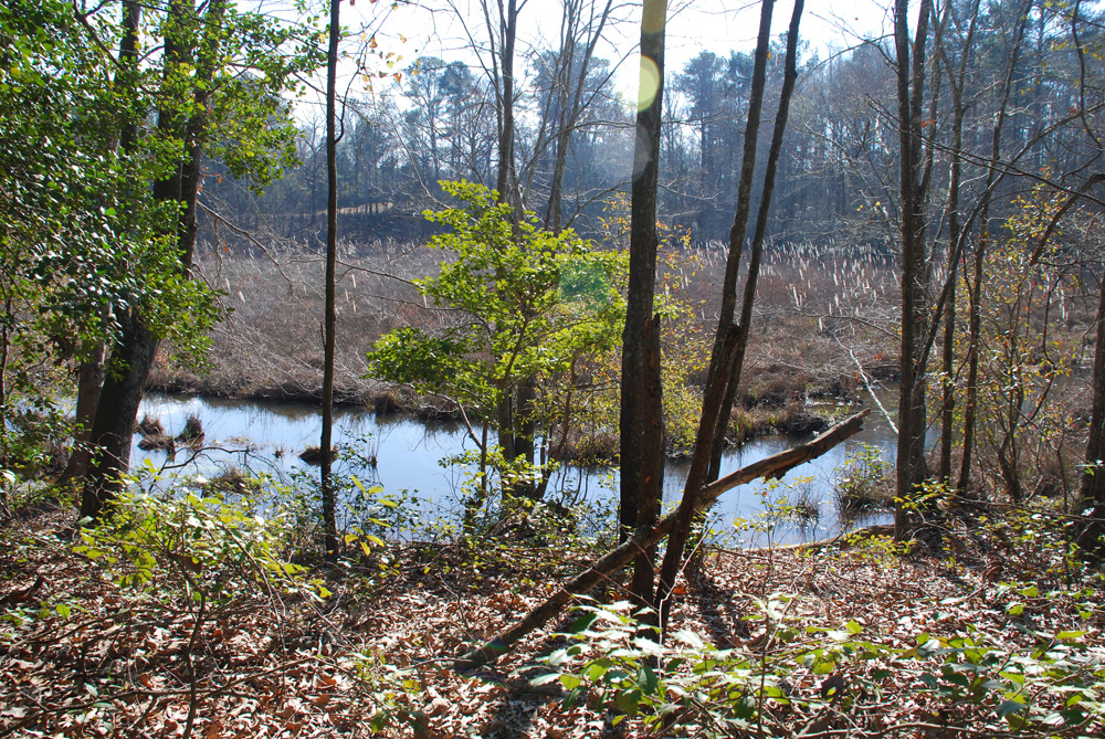 Off The Beaten Path – Discovering Lombard Mill Pond