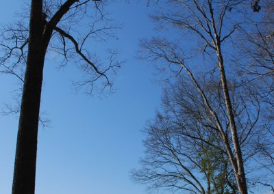 The historic landscape of Cedar Falls Farm, Hart County GA
