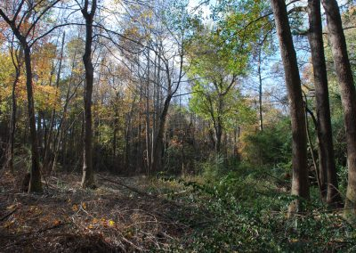 Restoration work, removing invasive plants in South Augusta