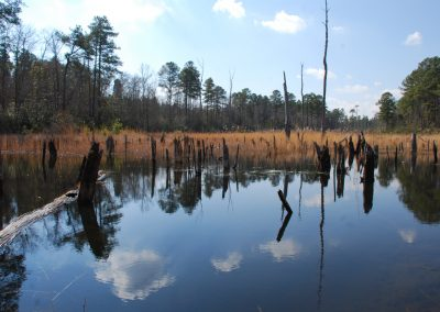 Preserved land in the process of restoration, Richmond County