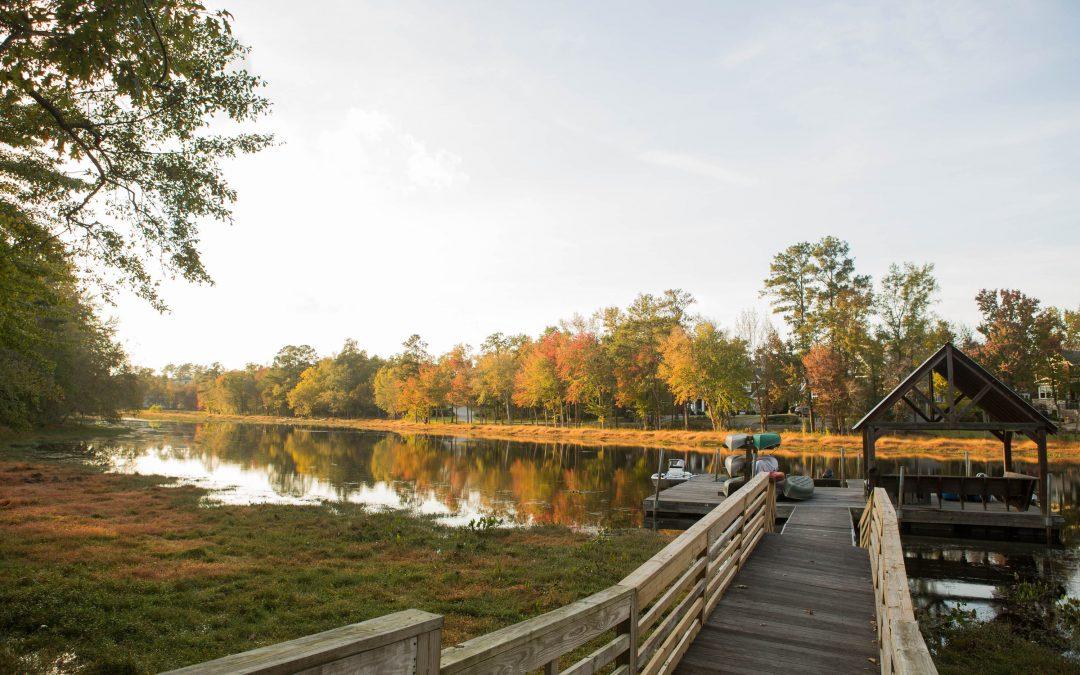 Conservation Spotlight: River Island