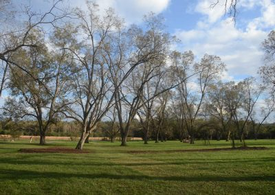 Pecan Orchard at Johnson-Welter Heritage Farm